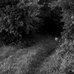Un chemin inattendu