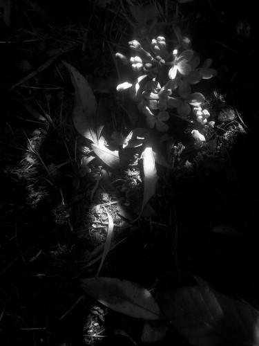 — Un trésor se cache…
